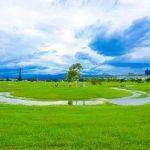 敬老卡坐捷運|幸福水漾公園
