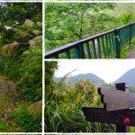 十八份頂圳步道/風尾步道